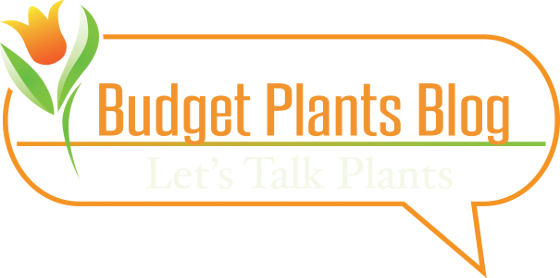 Let's Talk Plants