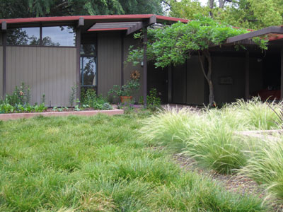Three Lawn Replacing Plants For The Southern California Landscape
