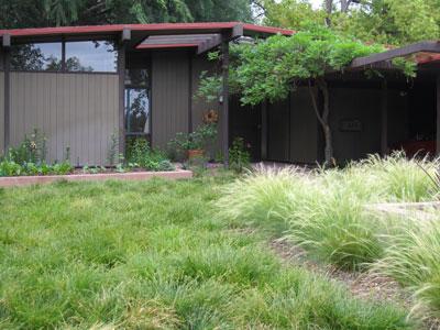 Carex-divulsa-Berkley-Sedge-2-small